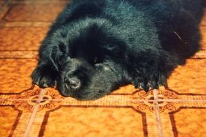 CozySleeping