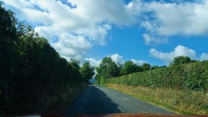 IrelandHedgeRowsRoad